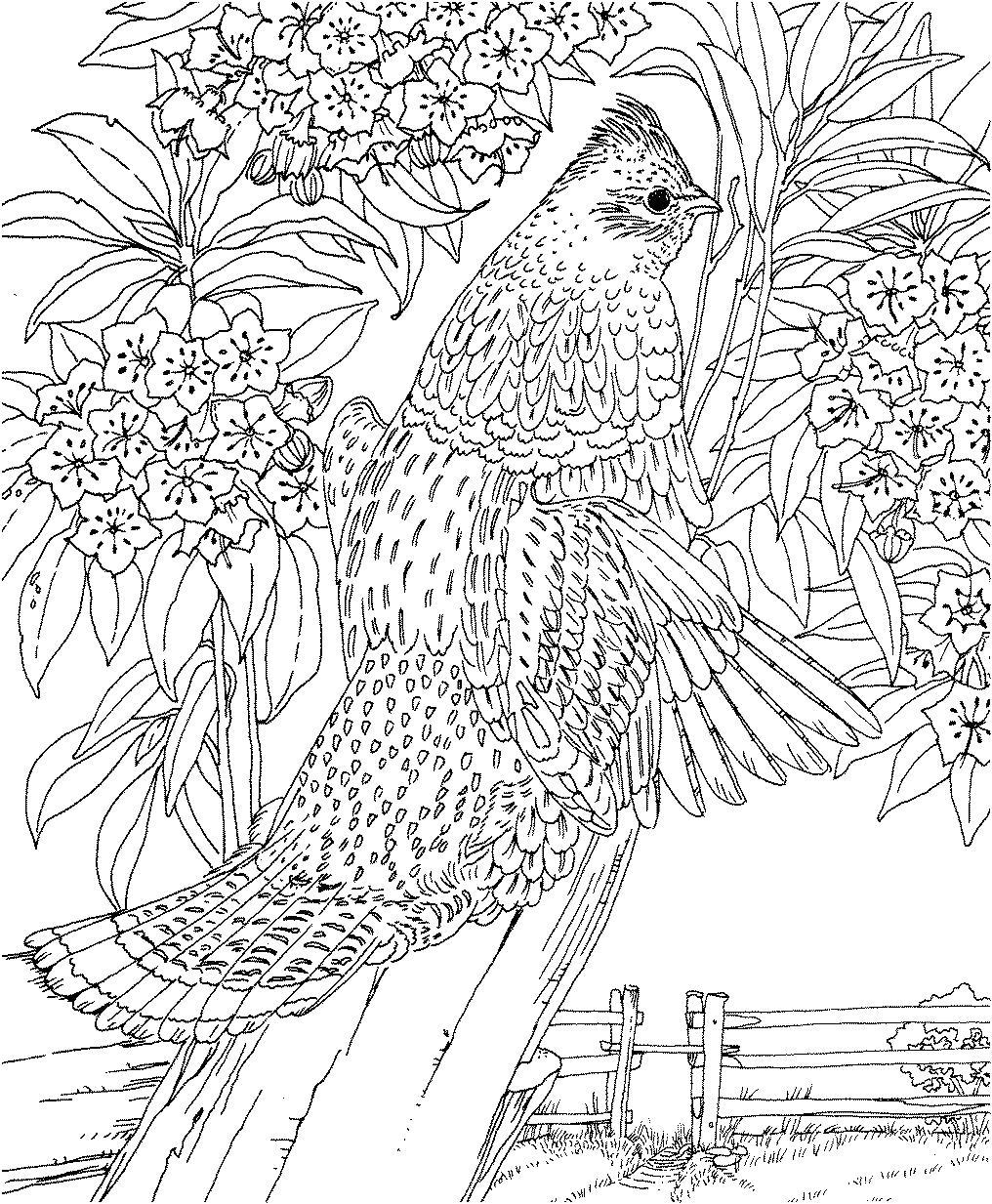 Птица на дереве Раскраски для взрослых скачать