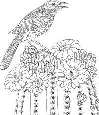 Птица на цветущем кактусе Раскраски для взрослых скачать