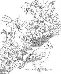Птица в лилиях Антистрессовые раскраски