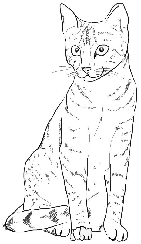 Кошка с большими глазами Раскраски антистресс в хорошем качестве