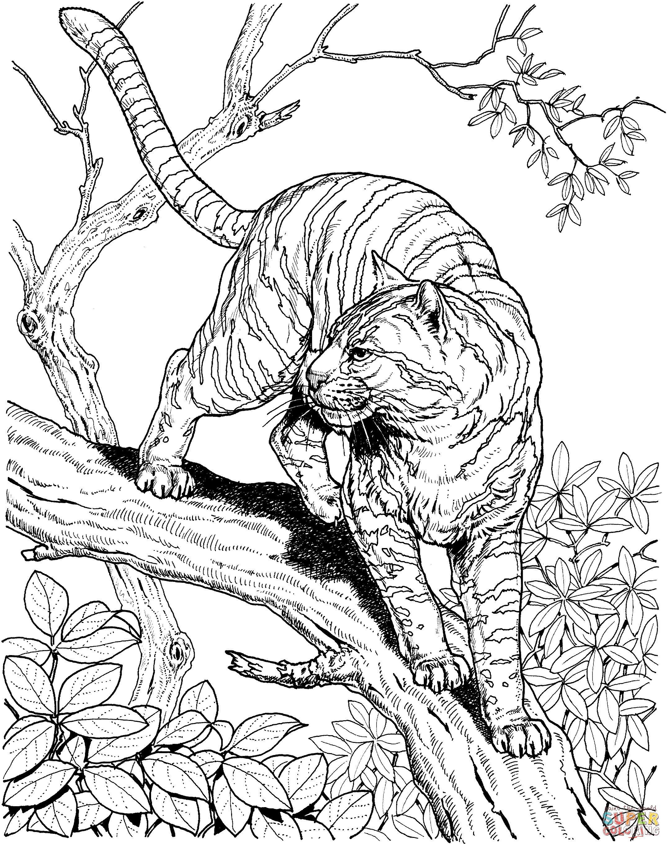 полосатая кошка на ветке дерева антистрессовые раскраски