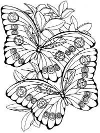 Две бабочки Картинки антистресс раскраски