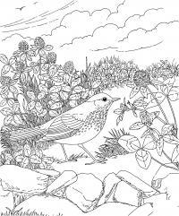 Птица среди цветов на камнях Антистрессовые раскраски