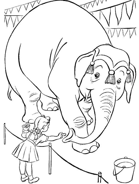 Индийский слон в цирке Скачать сложные раскраски