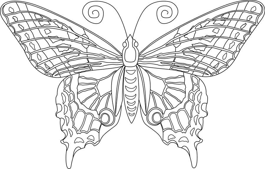Бабочка со сложными узорами Раскраски для медитации