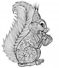 Белка с орешком Раскраски для взрослых скачать
