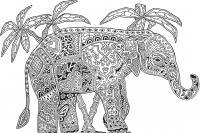 Слон индийский Раскраски для взрослых скачать