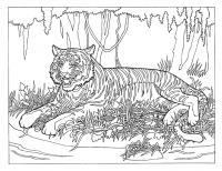 Тигр лежит в лесу Раскраски антистресс бесплатно
