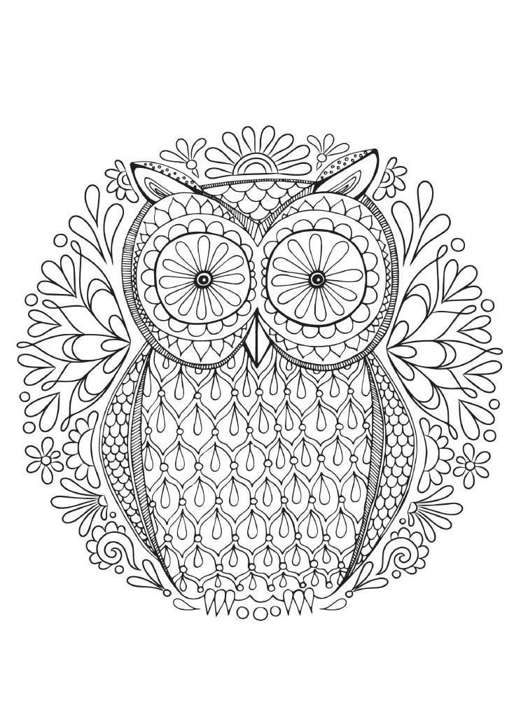 Раскраски для взрослых с совой