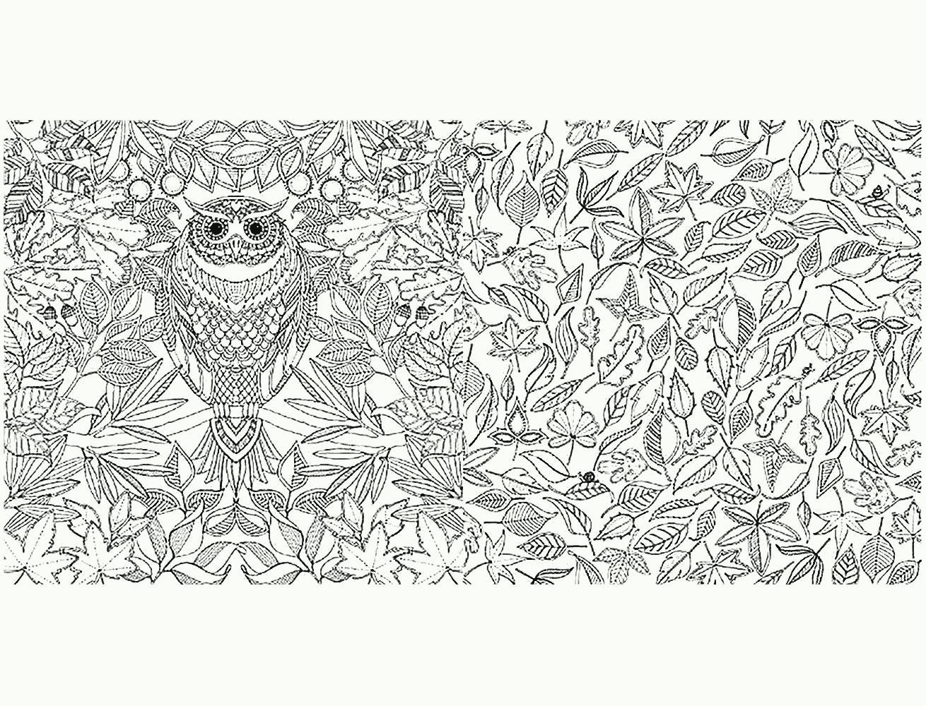 сова в листьях раскраски антистресс в хорошем качестве