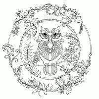 Сова в кольце из листьев Медитативная раскраска