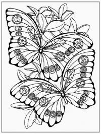 Бабочки Раскраски антистресс бесплатно