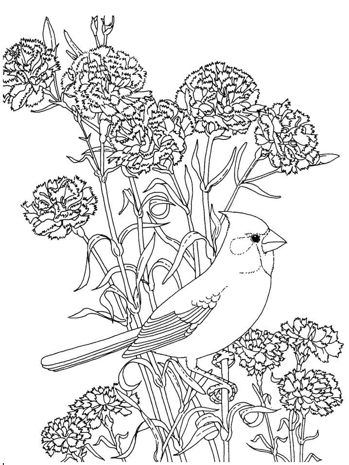 Гвоздики и птица раскраска для снятия стресса Раскраски для взрослых скачать