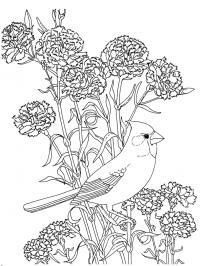 Гвоздики и птица раскраска для снятия стресса Скачать сложные раскраски