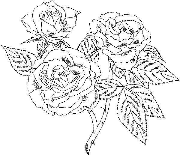 Цветы розы сложная раскраска Скачать сложные раскраски