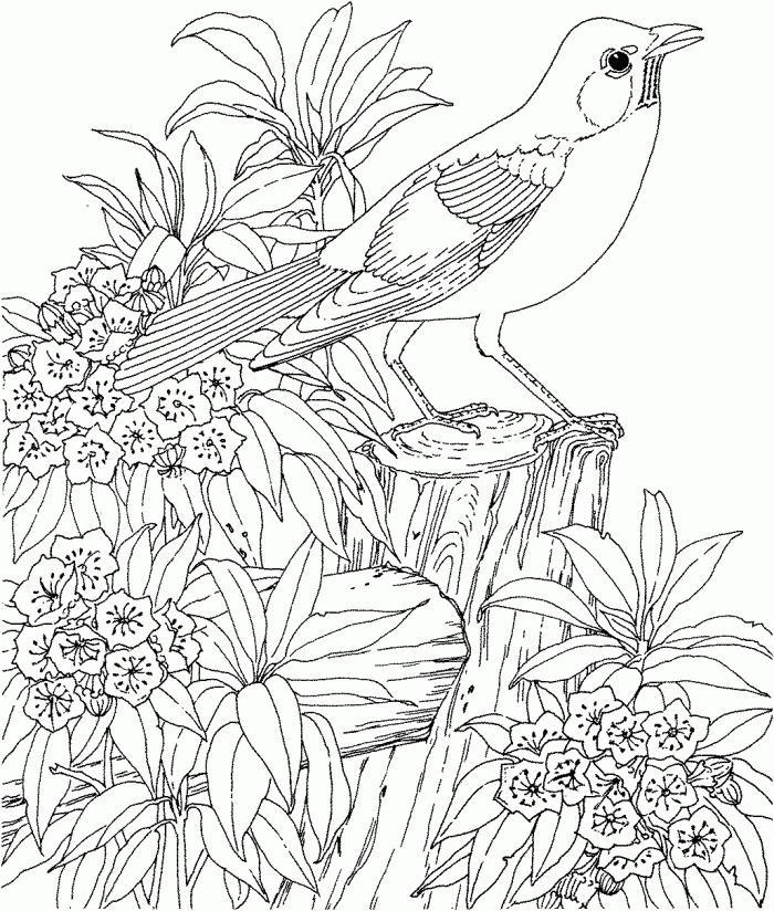 Птица сидит на пеньке среди цветов Раскраски для взрослых скачать