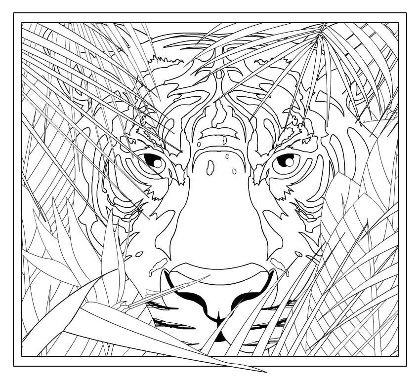 Тигр выглядывает из травы Раскраски для снятия стресса