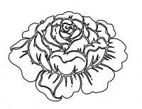 Цветок розы Раскраски для взрослых скачать