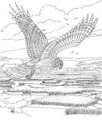 Парящая сова Медитативная раскраска