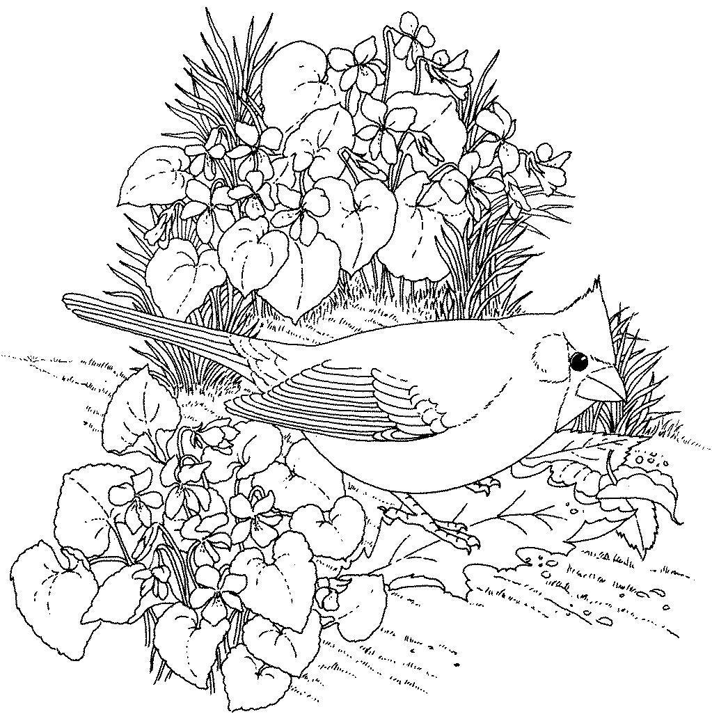 Птица в цветах Антистрессовые раскраски