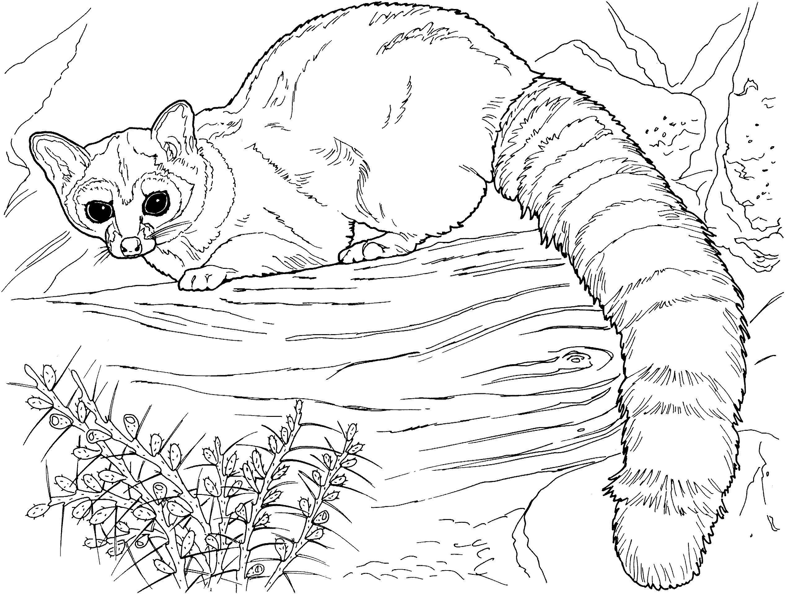 Смешное животное с пушистым хвостом Раскраски антистресс бесплатно