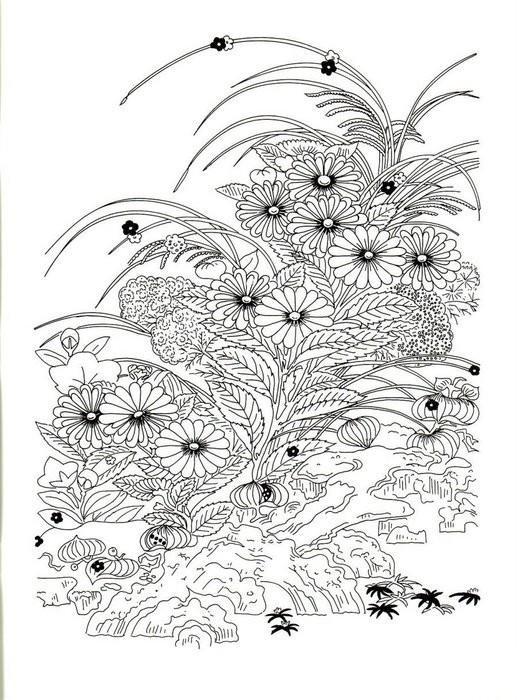 Полевые цветы Раскраски для взрослых скачать