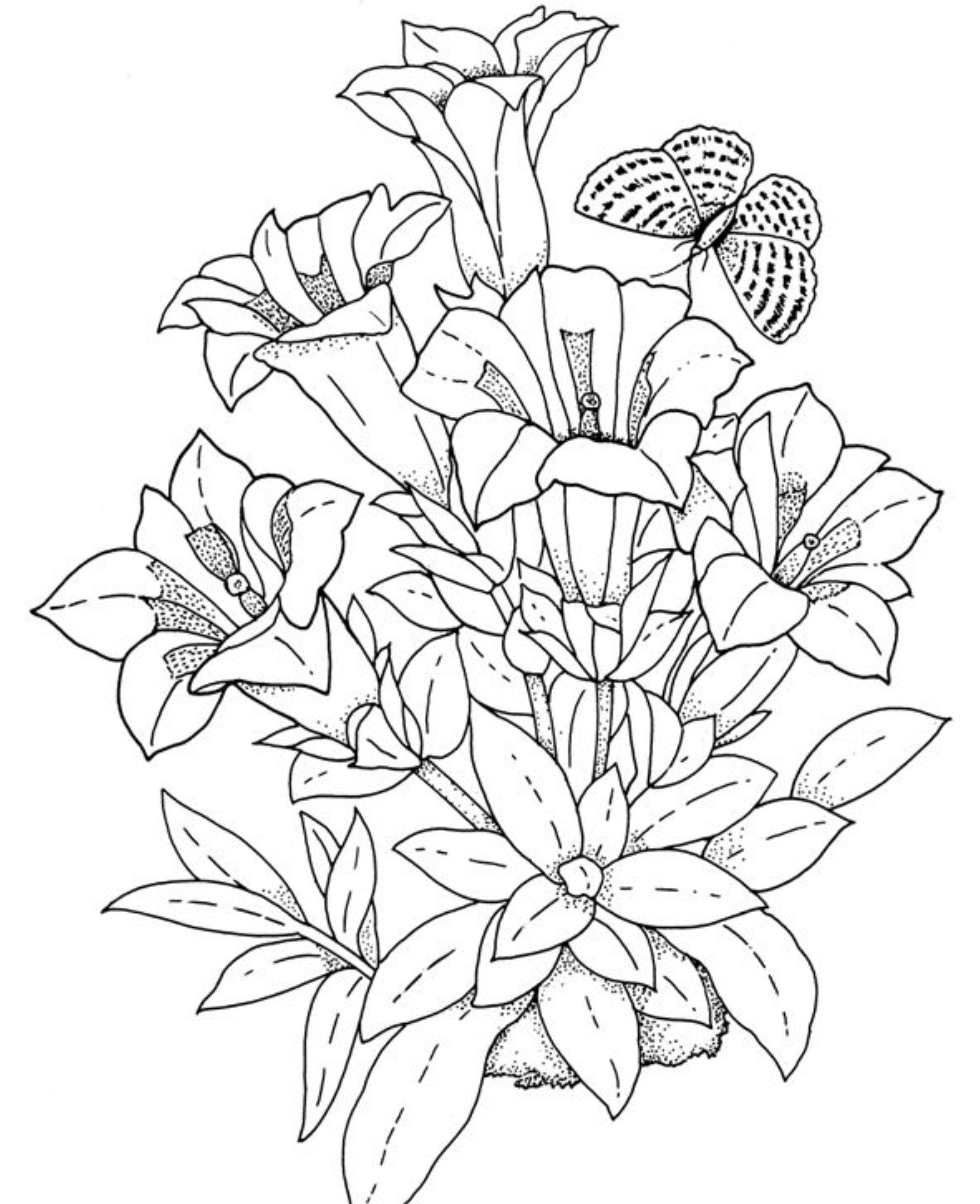 Бабочка над колокольчиками Раскраски для взрослых скачать