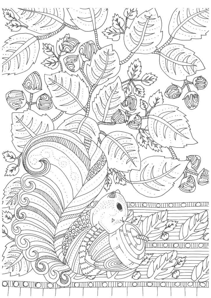 Белочка с желудем возле дерева Скачать сложные раскраски