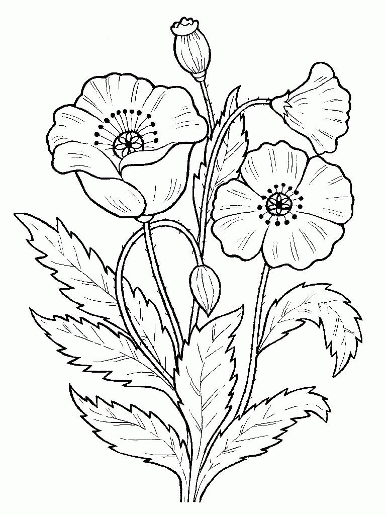 Цветы Мак Лучшие раскраски антистрессАнтистресс онлайн