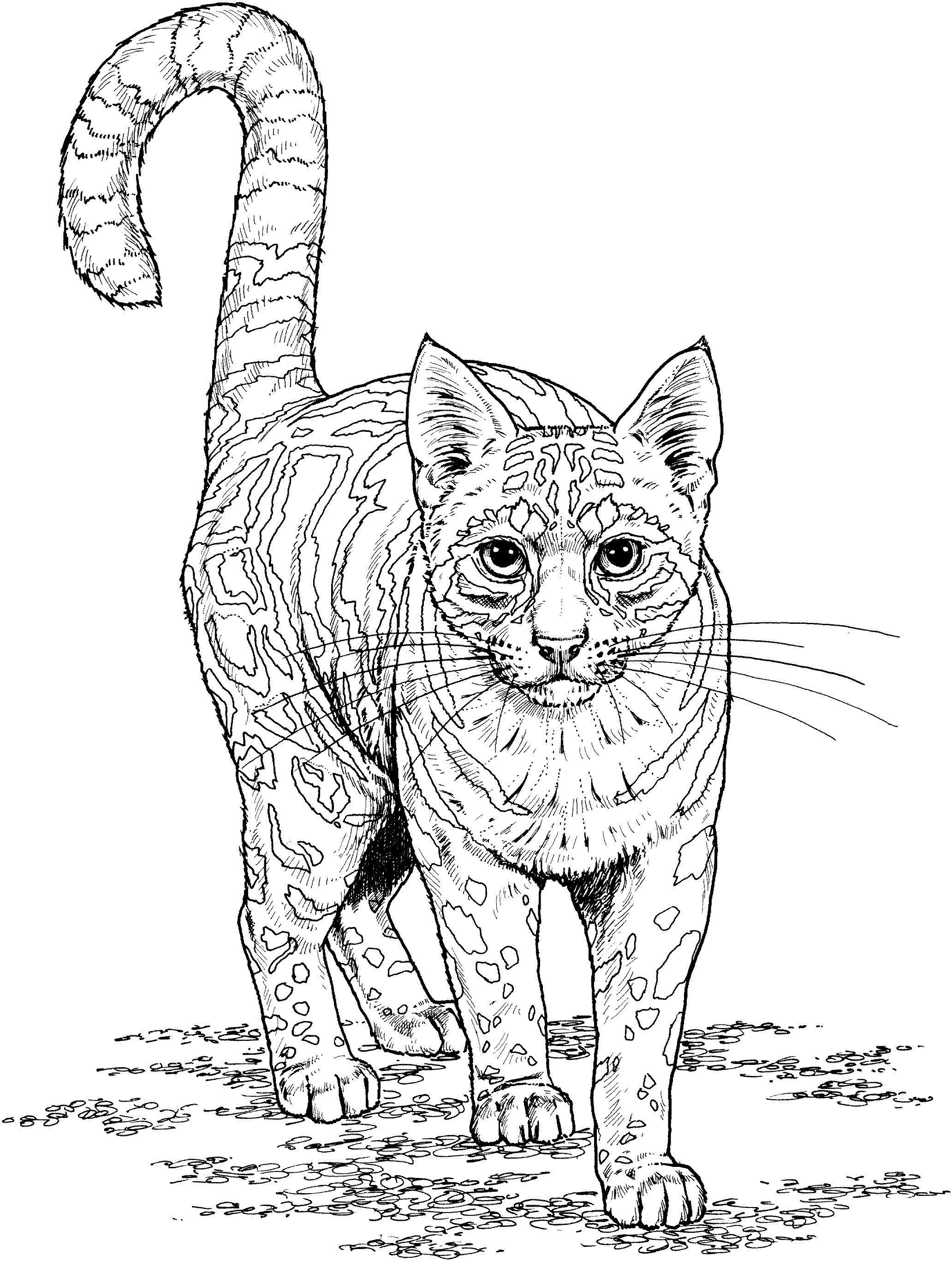 Тигристый кот Лучшие раскраски антистресс