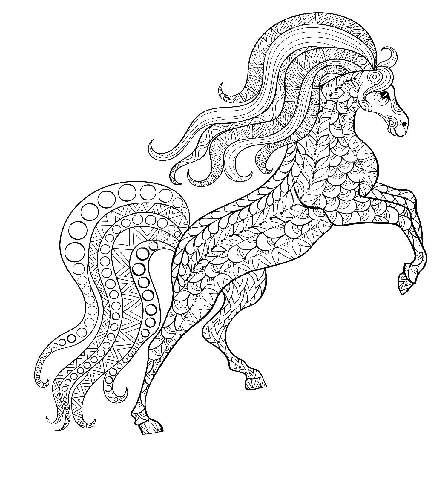 Конь Раскраски для взрослых скачать