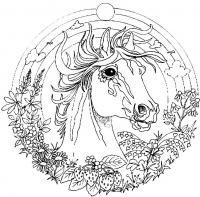 Лошадь Раскраски для взрослых скачать