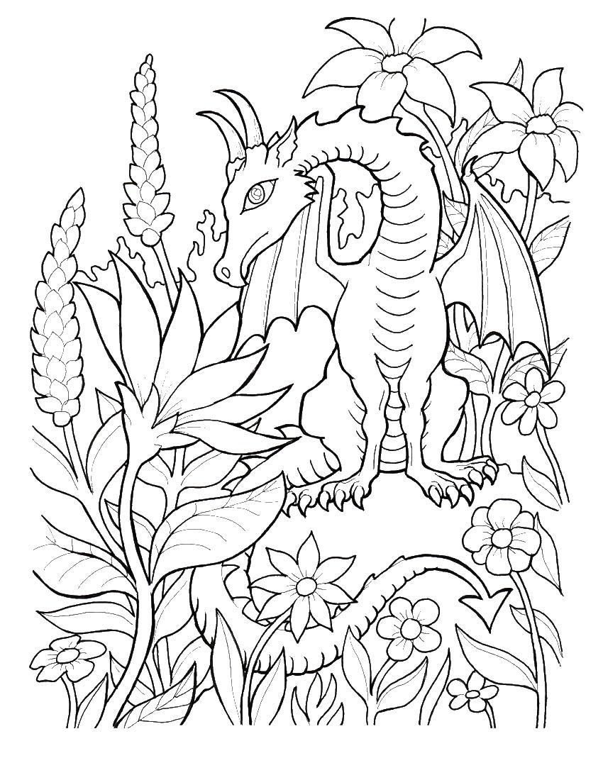 Дракон в цветах Раскраски для взрослых скачать