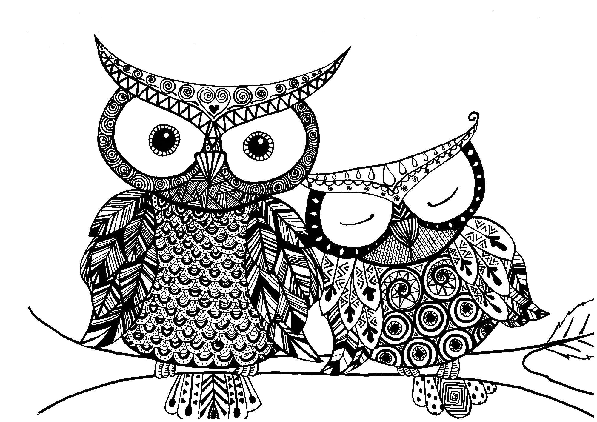 Красивые совы сова Раскраски для взрослых антистресс