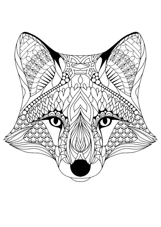 Мордочка лисы Раскраски для взрослых скачать