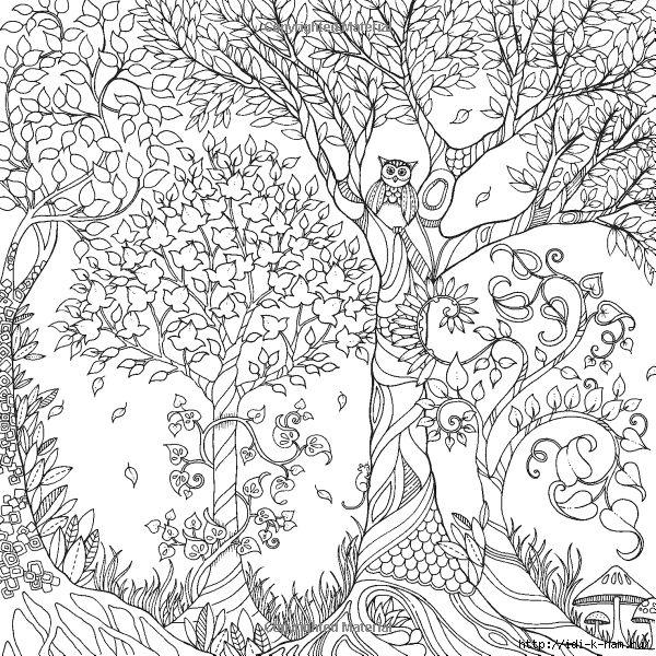 Сова в лесу Антистрессовые раскраски