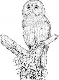 Сова на ветке обвитой вьюном Медитативная раскраска