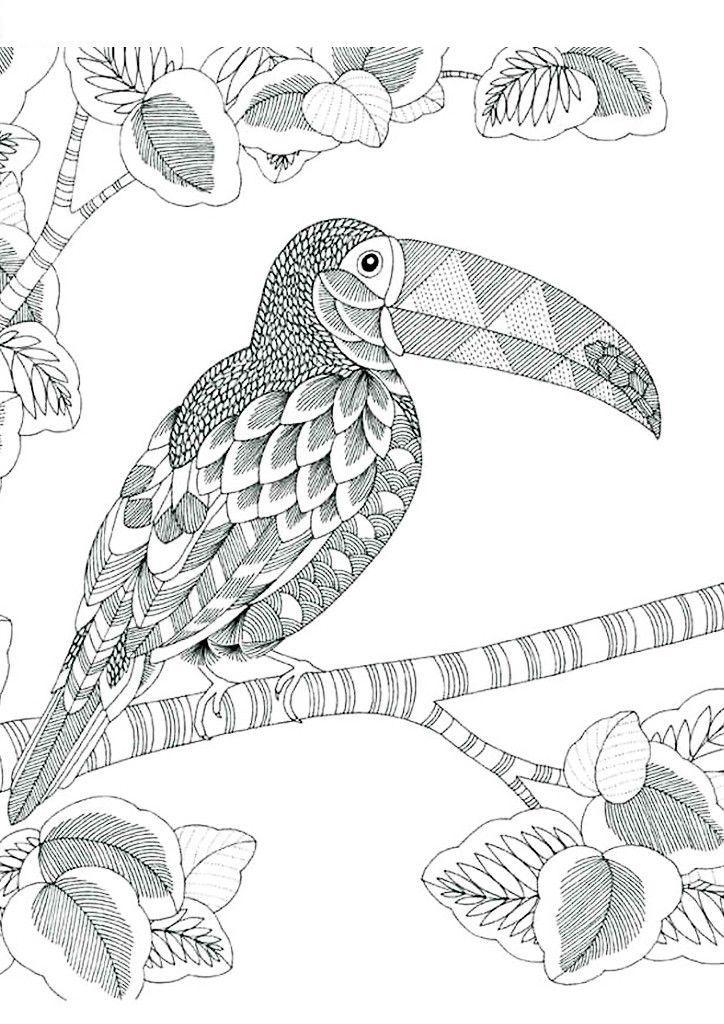 Африканская птица Антистрессовые раскраски