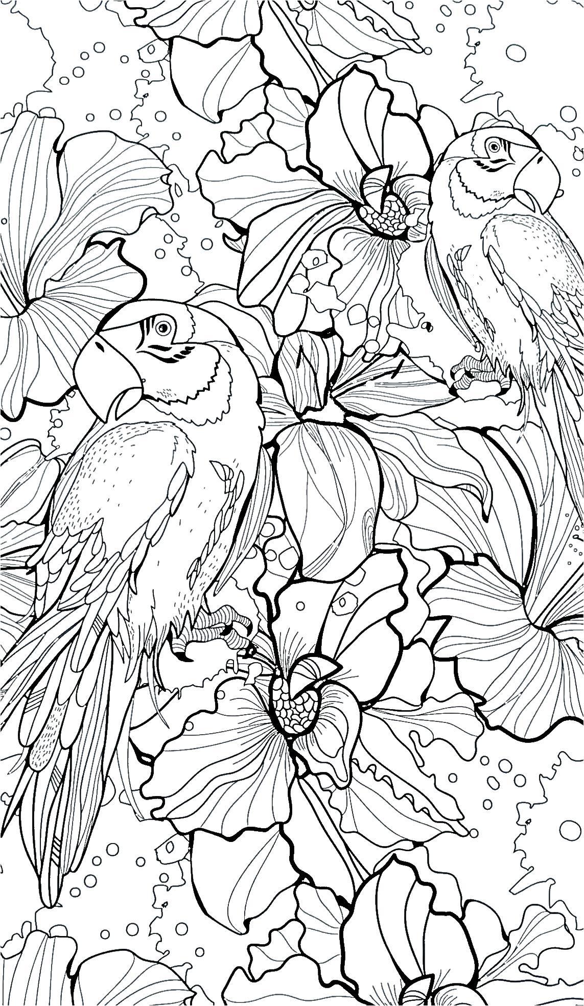 Лилии и попугаи Раскраски для взрослых антистресс